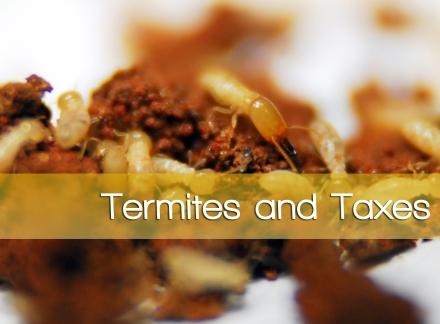 termite-pest-control-copy